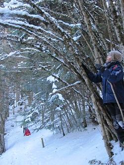 Un túnel de vegetació i neu! / © Gg