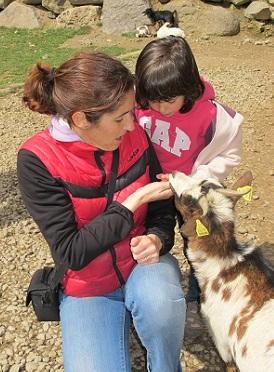 Els cabrits són molt simpàtics! / © Gg