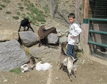 Els animals de la granja estan molt acostumats a les visites. / © Gg