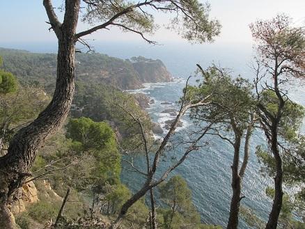 El camí de Ronda travessa la pineda i baixa fins a les cales. I ofereix vistes espectaculars. /© Gg