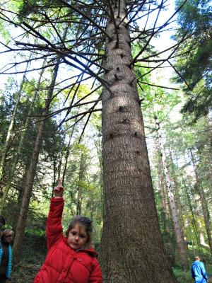 Aquests arbres s'enfilen amunt, molt amunt! /© Gg