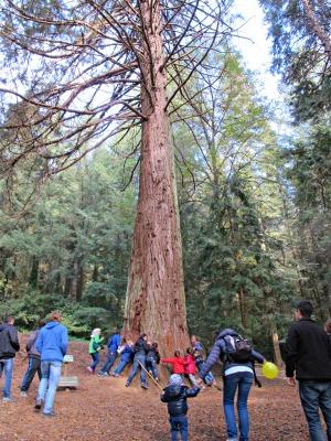 Els arbres són terapèutics. Una gran abraçada ens dona energia! /© Gg