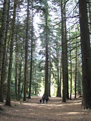 Aquí hi trobareu alguns dels arbres més ancians i alts de Catalunya. /© Gg