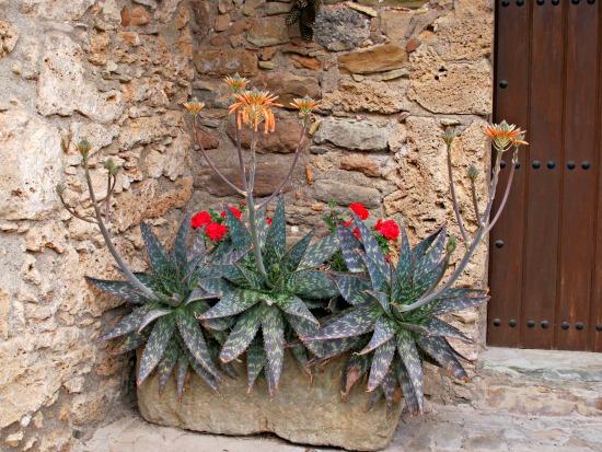 La riera de Les Nespres de Mura, quan rajava fort, va produir molt travertí. S'ha utilitzat a moltes cases del poble /© Gg