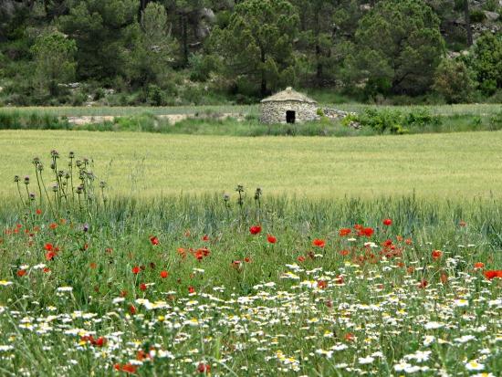 L'illa de Lesbos, el Maestrazgo, l'Alta Provença i una zona de volcans alemanya són els fundadors de la xarxa de Geoparcs /© Gg