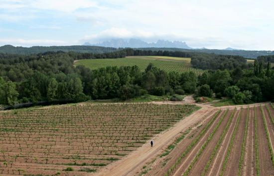 Les vinyes d'Oller del Mas, cabanes de pedra seca i Montserrat al fons /© Gg