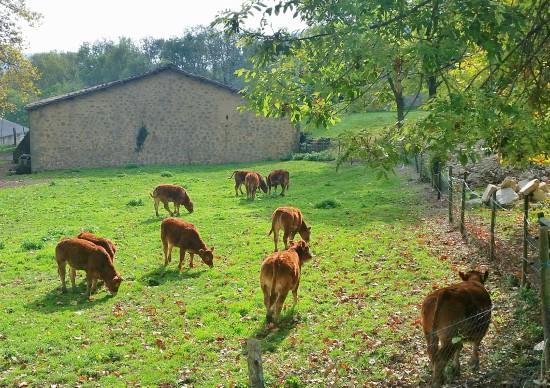 La meitat del Bisaura està inclosa en l'Espai d'Interès Natural de les serres de Milany-Santa Magdalena i Puigsacalm-Bellmunt. /© Gg
