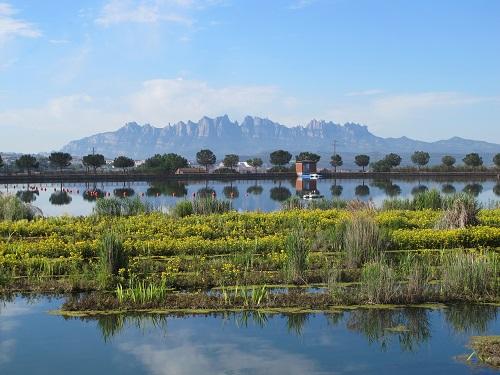 El Parc de l'Agulla té una fondària de 4 metres i una capacitat de 200.000 metres cúbics d'aigua /© Gg